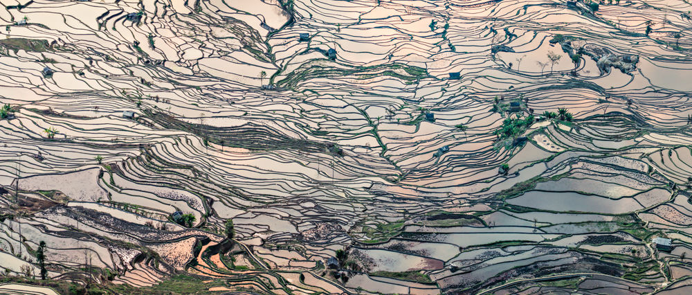 Network of Rice Terraces by William Yu Photography