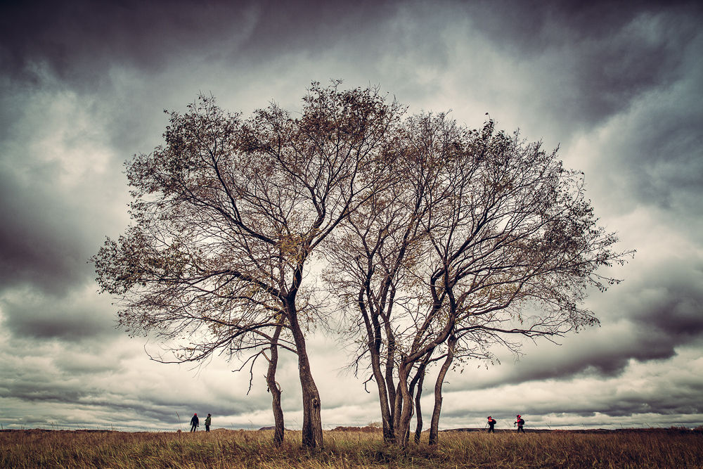 Photo in Random #tree #sky #dar #cloud #storm #fall #color