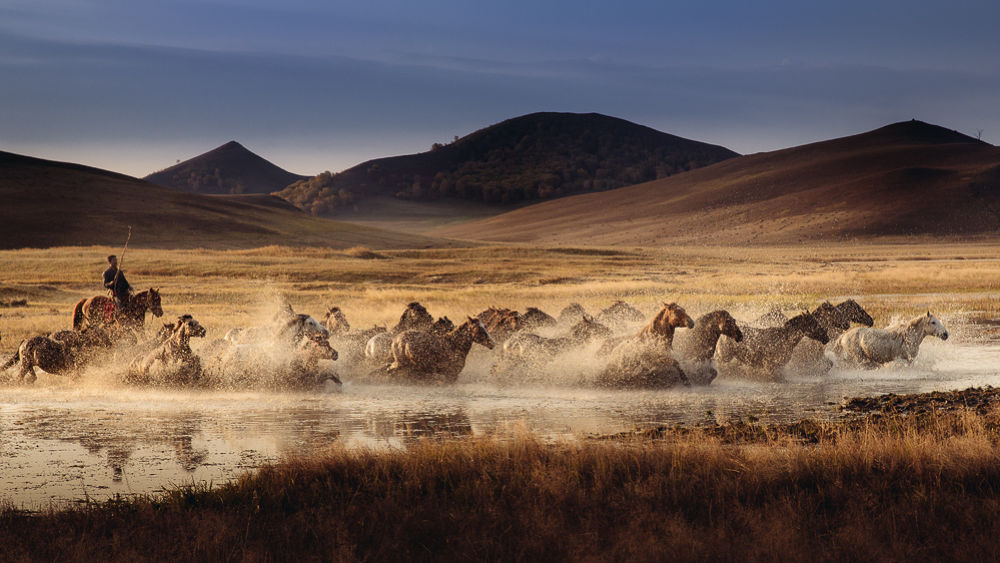 Photo in Animal #horse #cross #river #water #herd #china #farm
