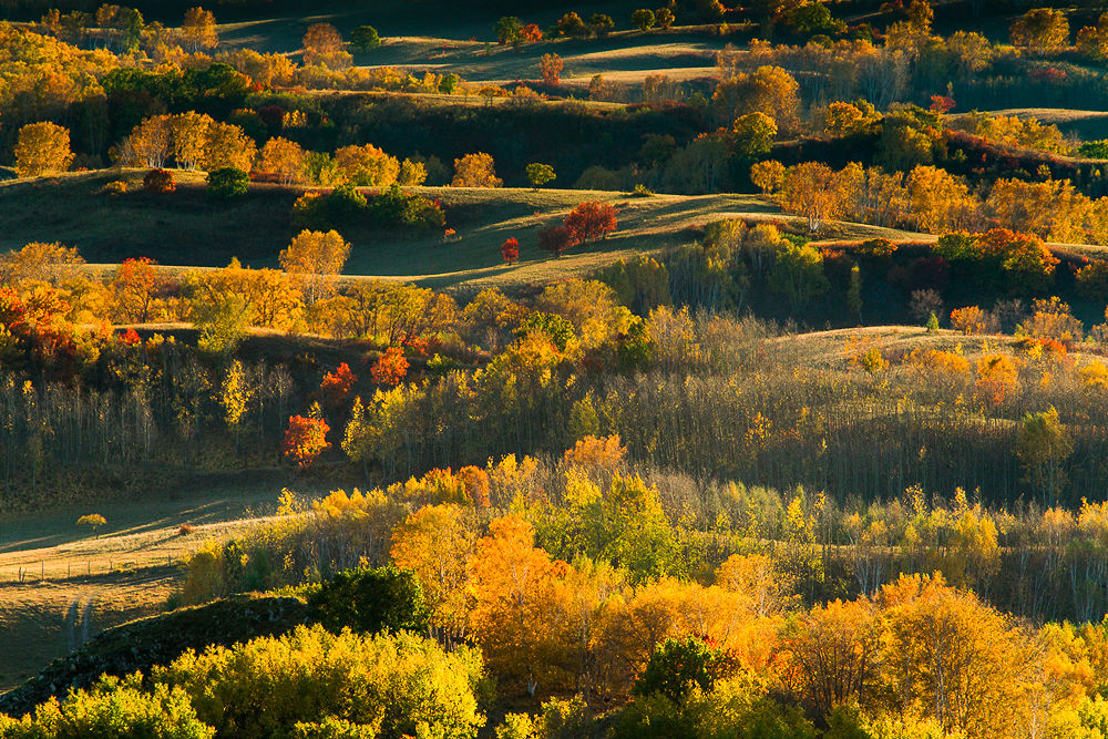 Fall Colors by William Yu Photography