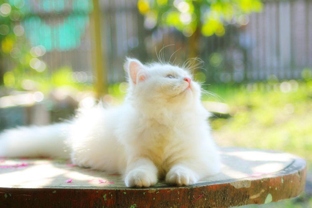 My Cat by ferinaherdina
