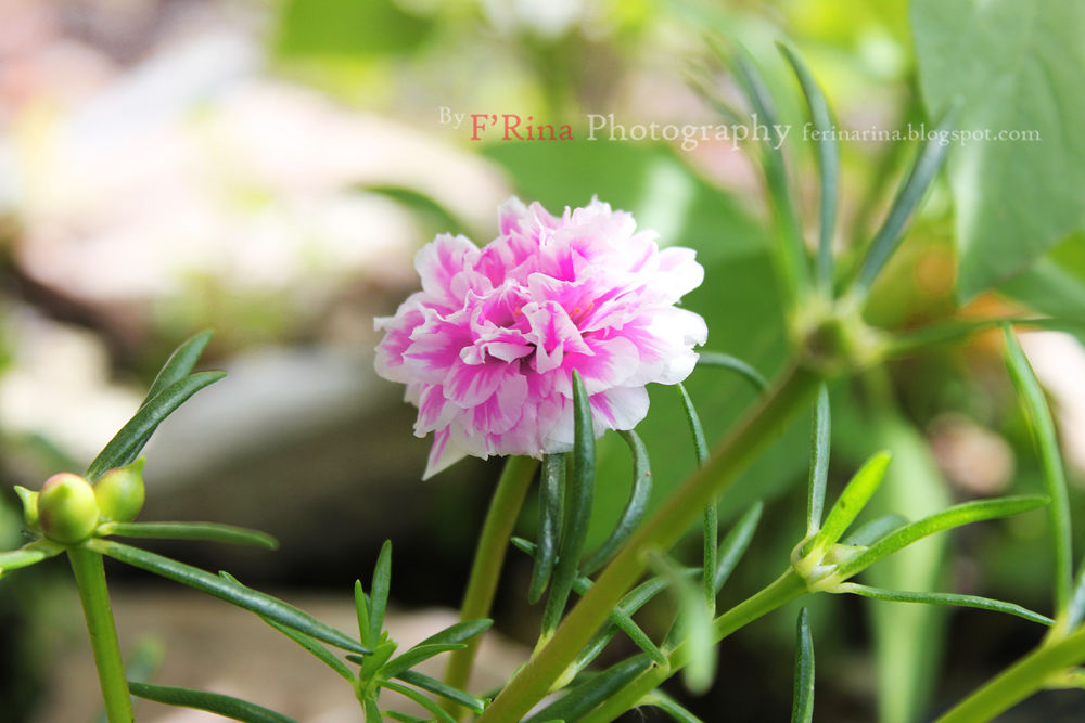 Flower by ferinaherdina