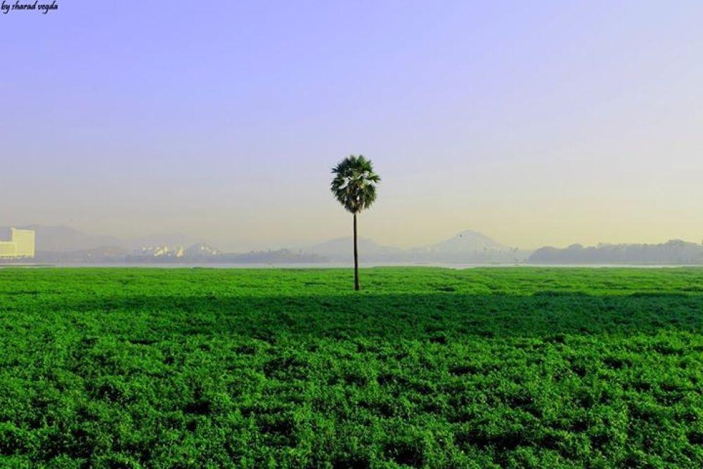 a lonely tree by sharadvegda