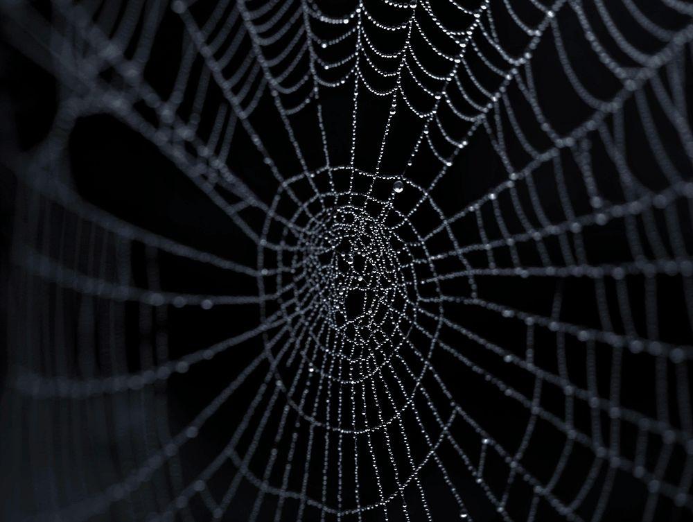 Web... by Katona Flórián