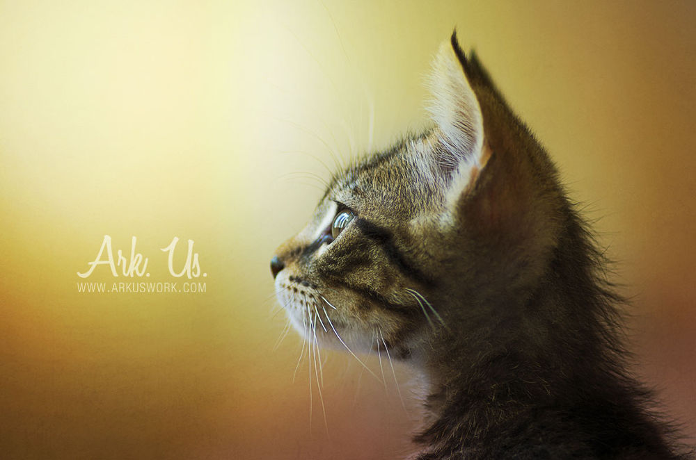 Photo in Animal #light