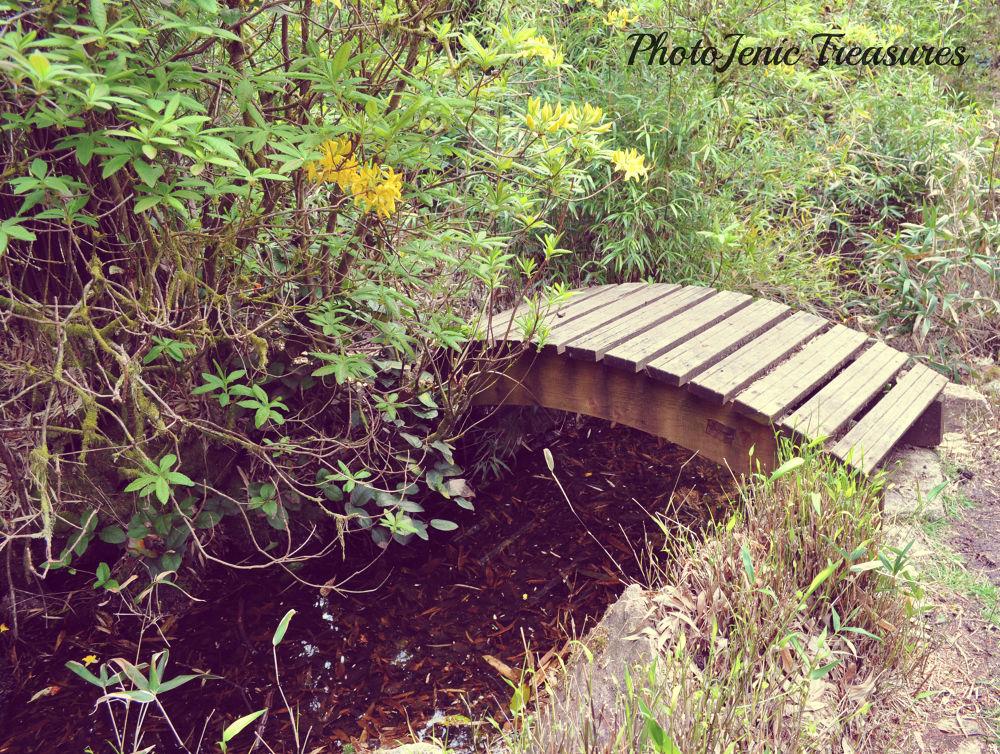 Bridge Water by PhotoJenic Treasures
