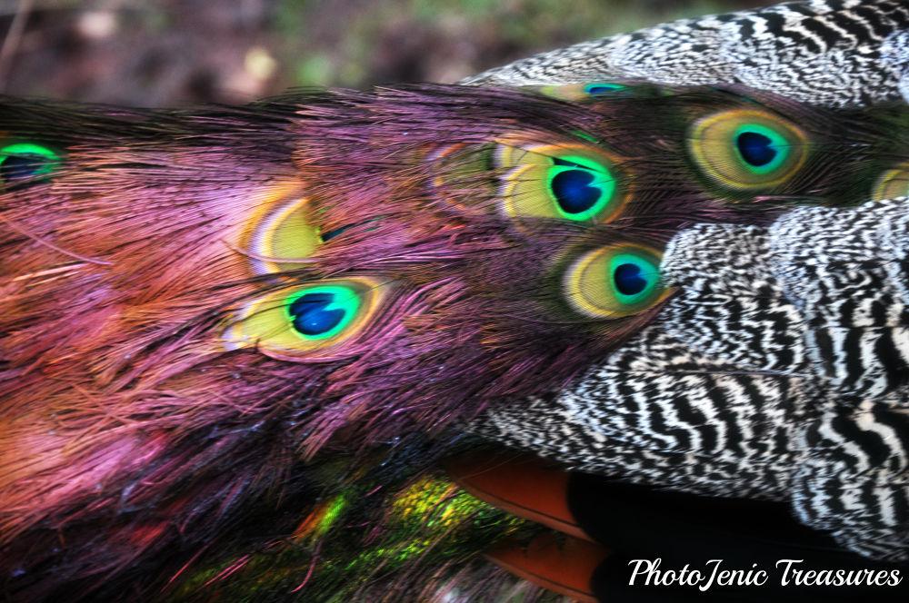 Eyes by PhotoJenic Treasures