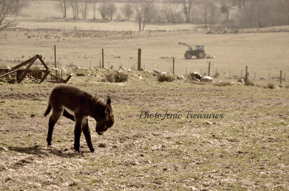 Little Donkey by PhotoJenic Treasures