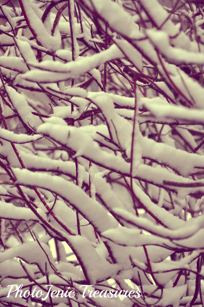 Red Branches by PhotoJenic Treasures