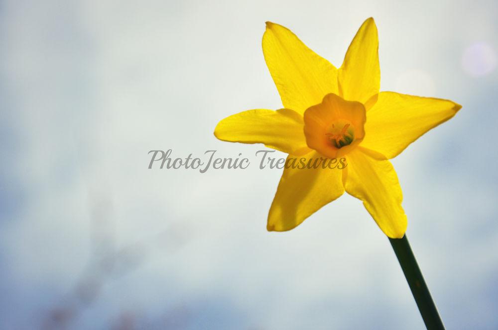 Sun Flower by PhotoJenic Treasures