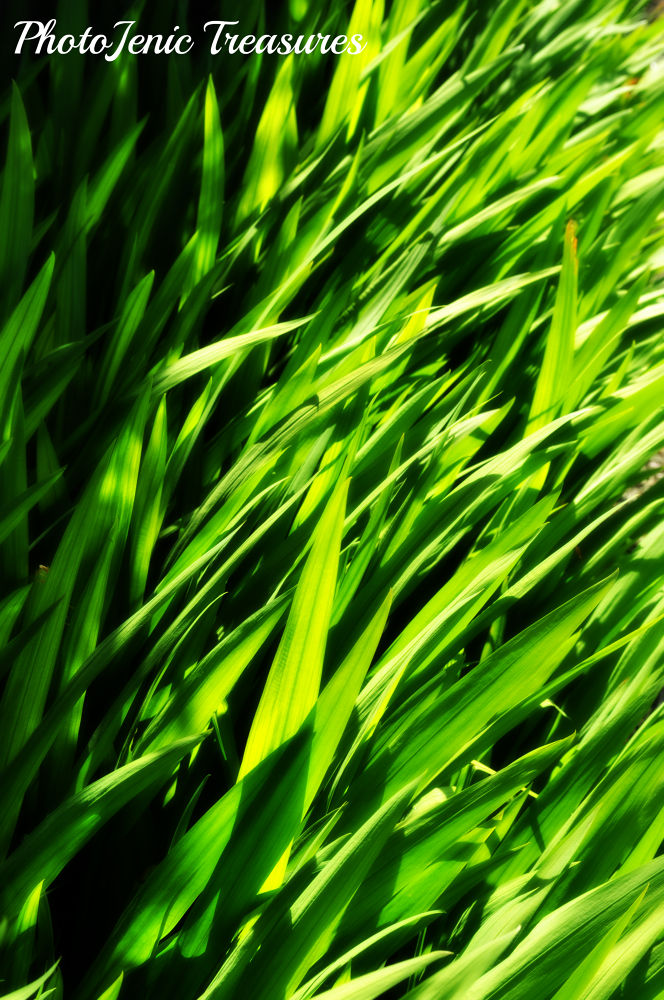 Photo in Nature #green #blades #grass #leaves #nature #photojenic treasures