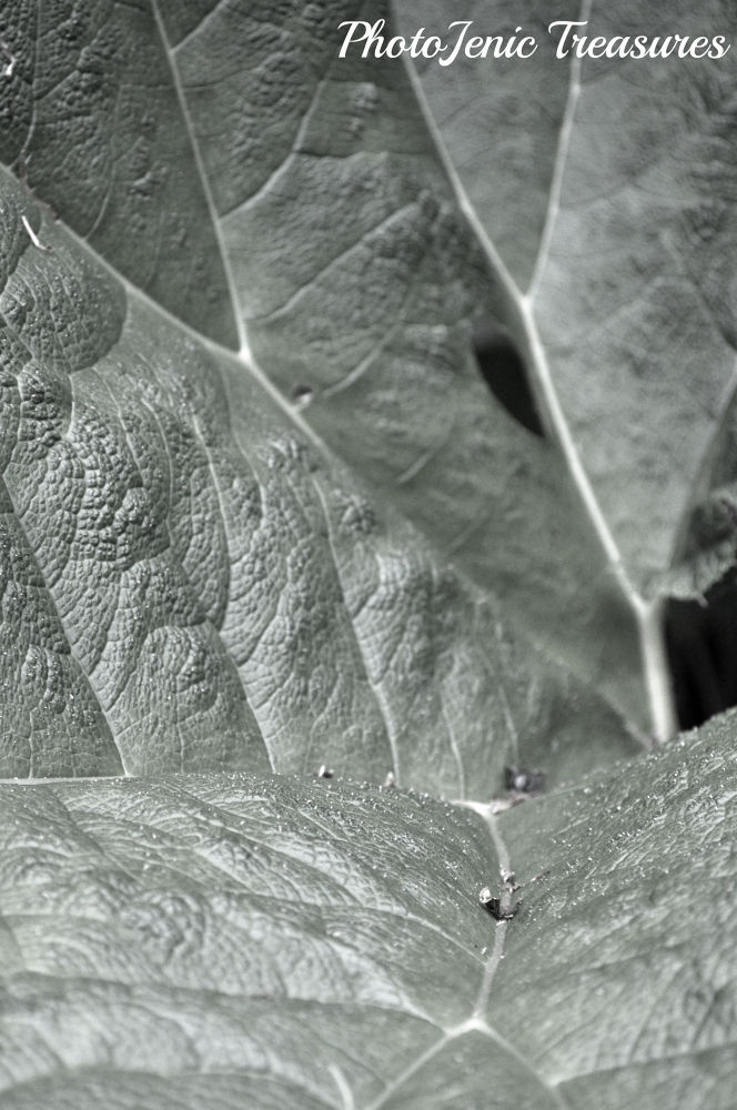 Veins by PhotoJenic Treasures