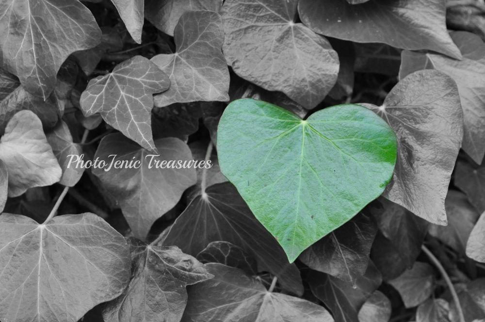 Heart by PhotoJenic Treasures
