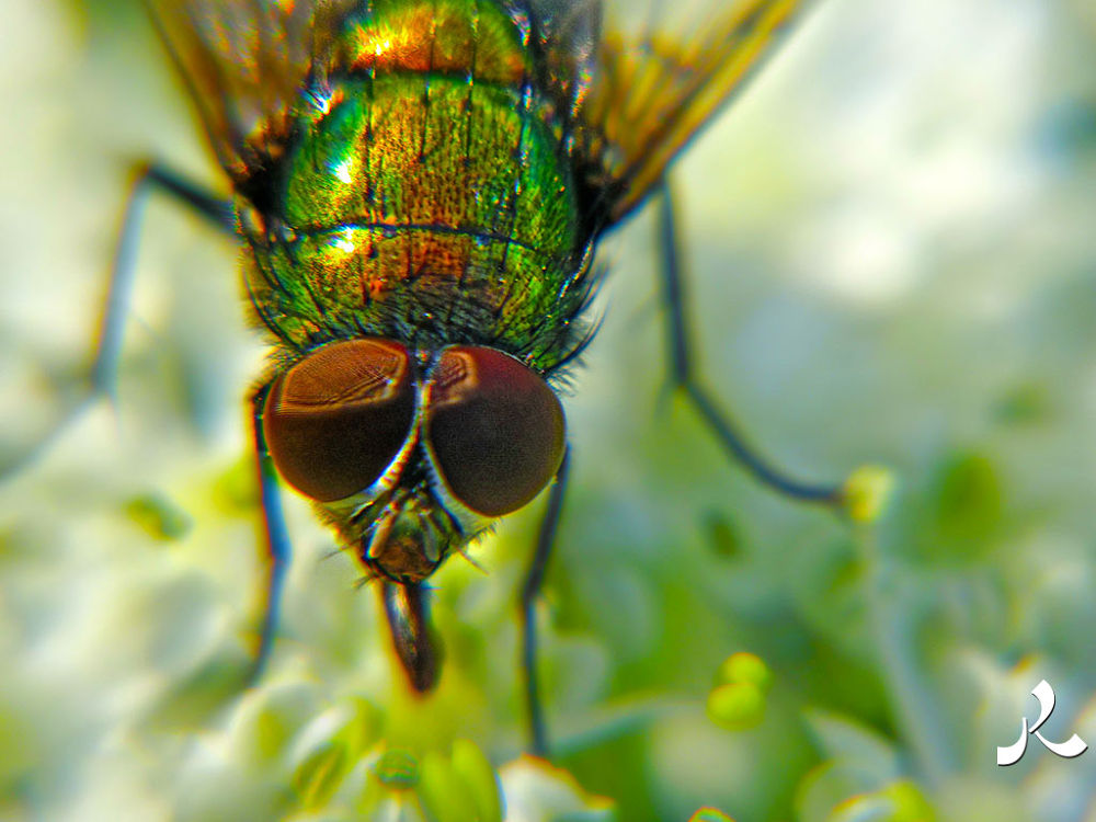 greenfly406 by jacquesraffin