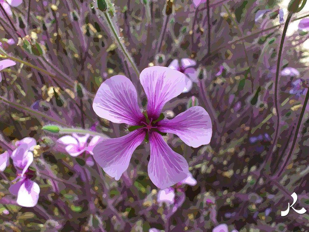 01-violetFleurPFlo by jacquesraffin