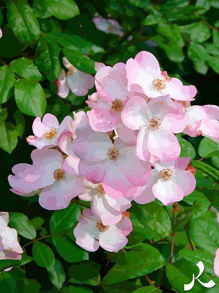 14-fleurjardinry14 by jacquesraffin