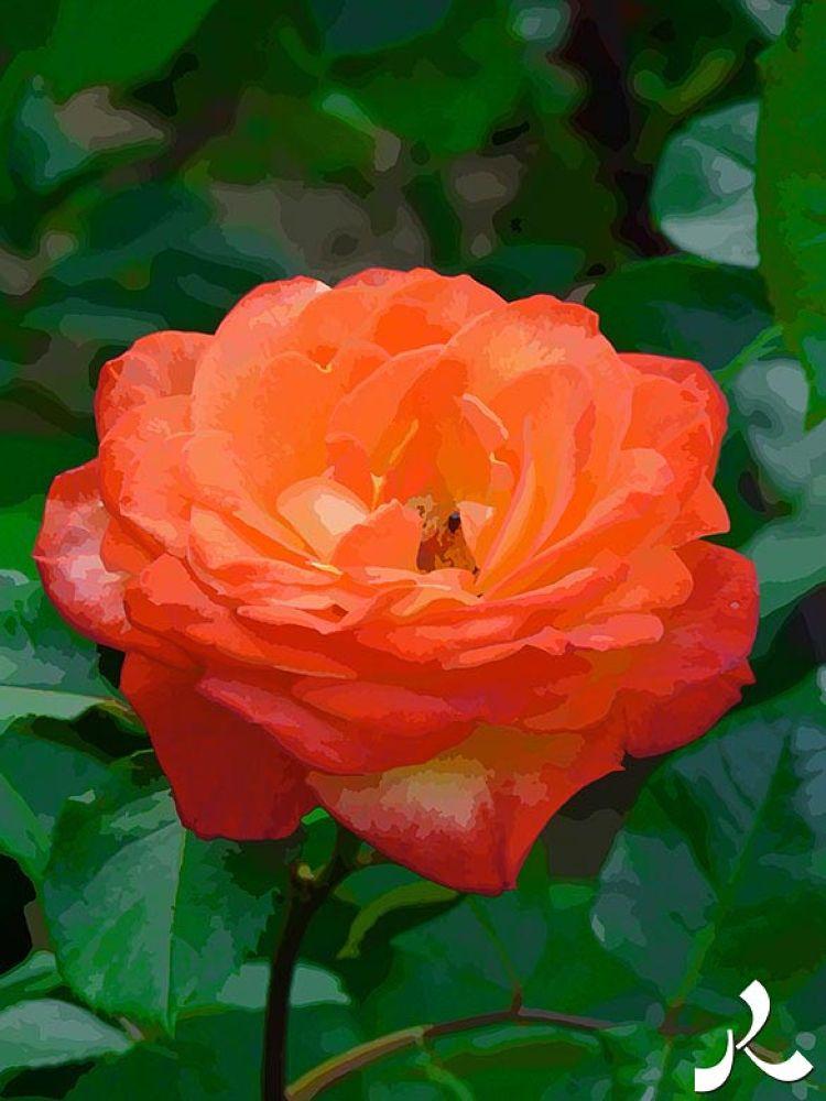 44-fleurjardinry27 by jacquesraffin