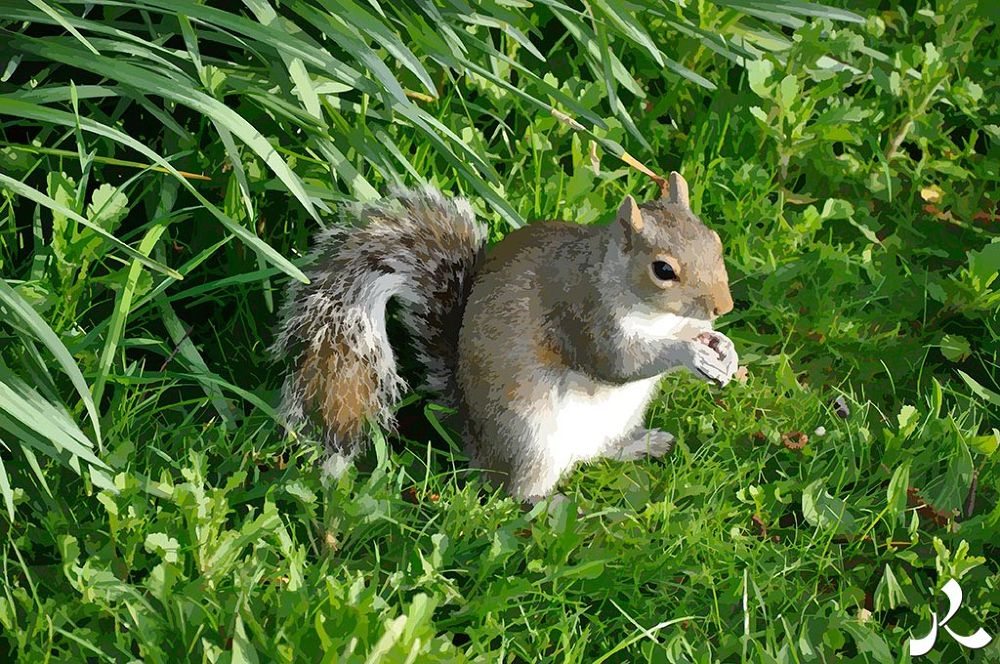 02-Squirrel_06 by jacquesraffin