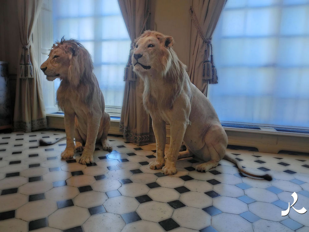 lionschass096 by jacquesraffin