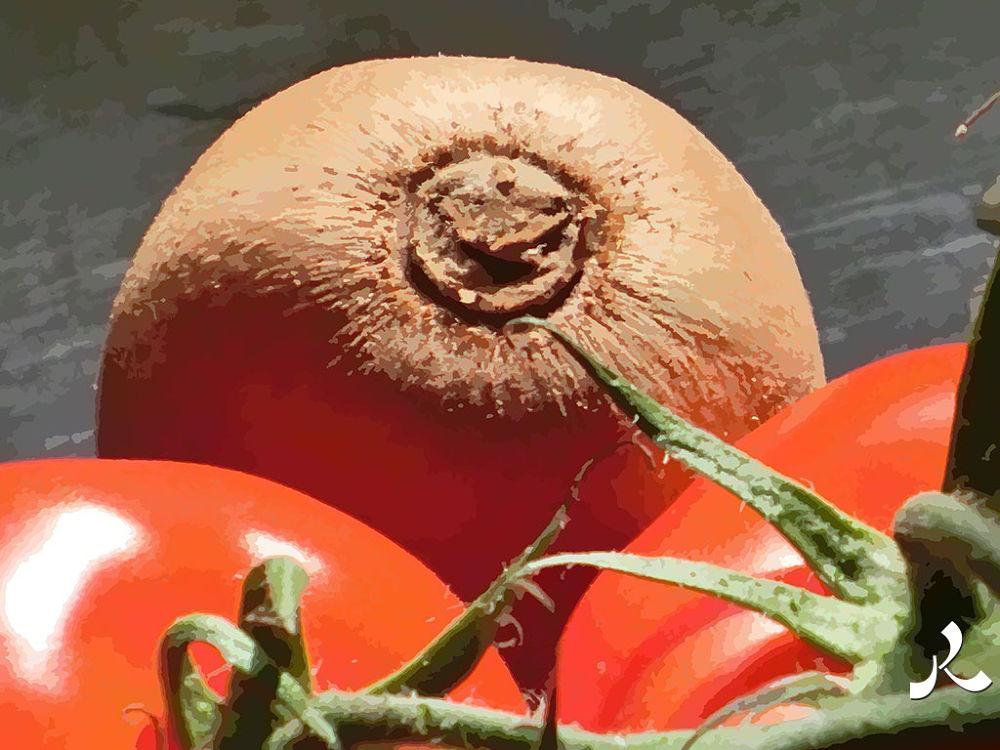 58-tomatoeskiwi by jacquesraffin