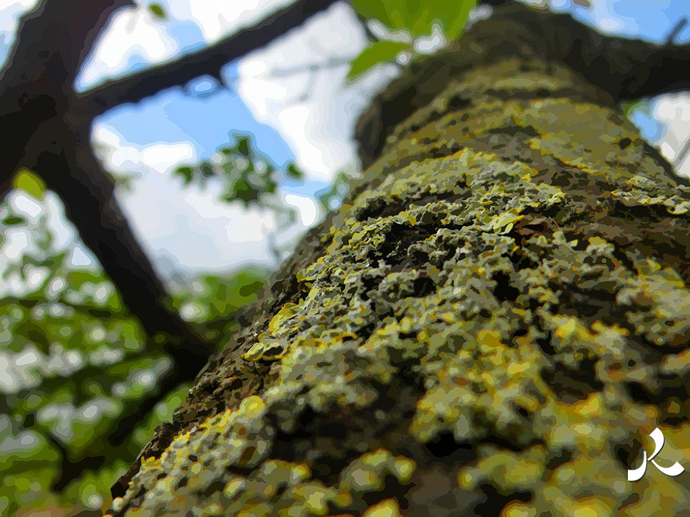 52-arbrelichen by jacquesraffin