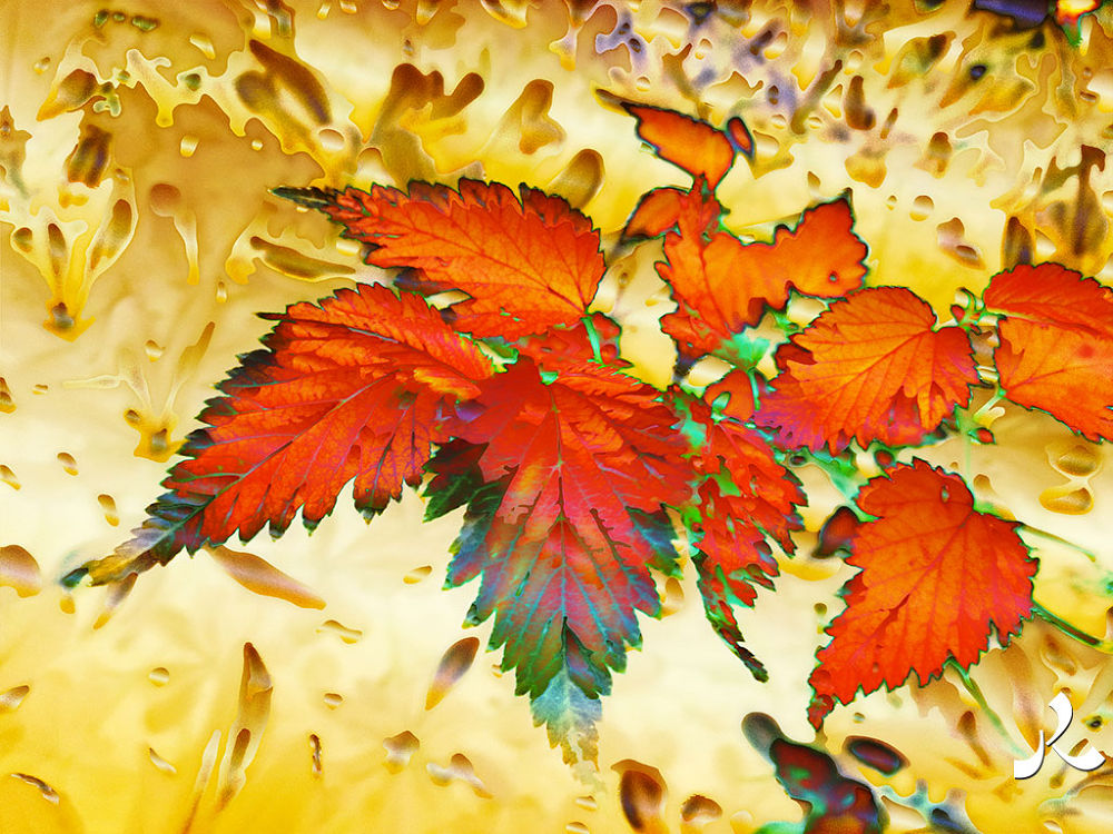 redleaves016iwor by jacquesraffin