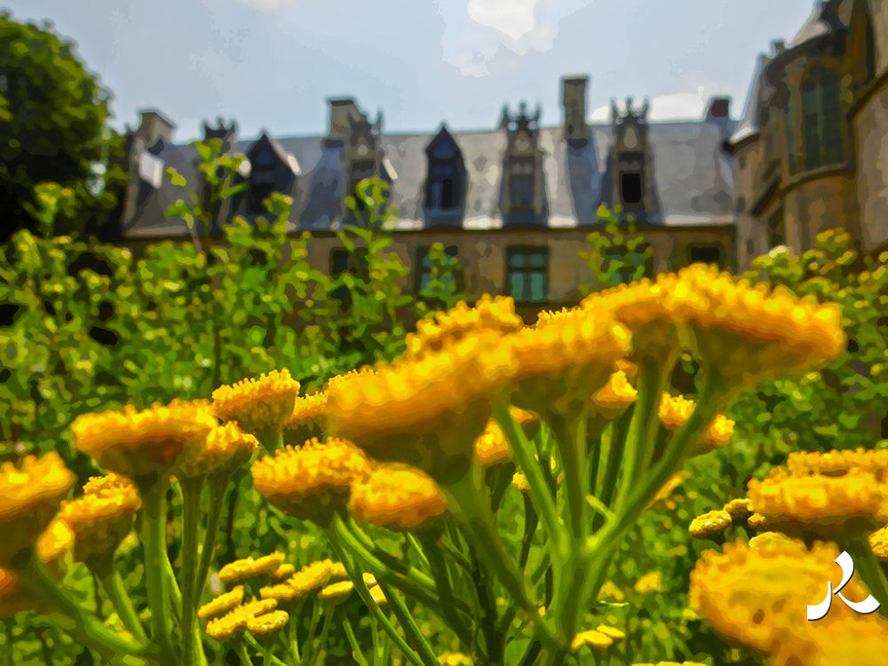 flrsjaunecluny355 by jacquesraffin