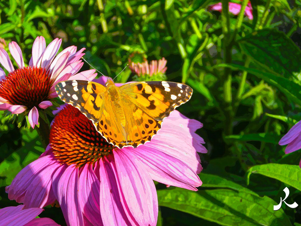 butterfly103 by jacquesraffin