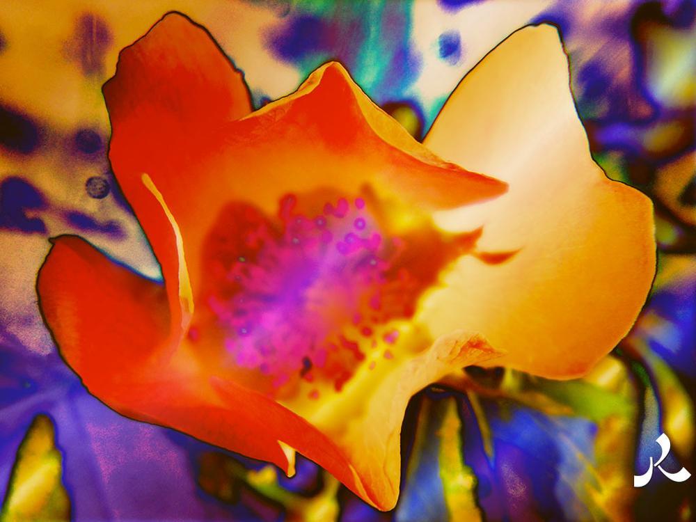 fleurRose644-17iwor by jacquesraffin