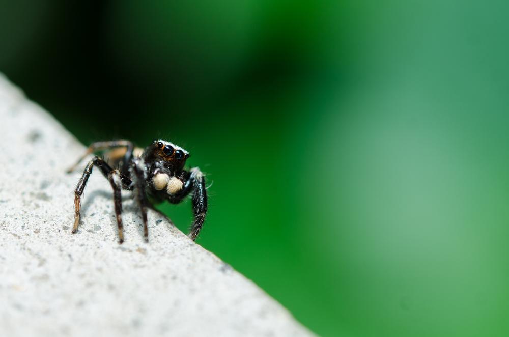 Spider by Primrose