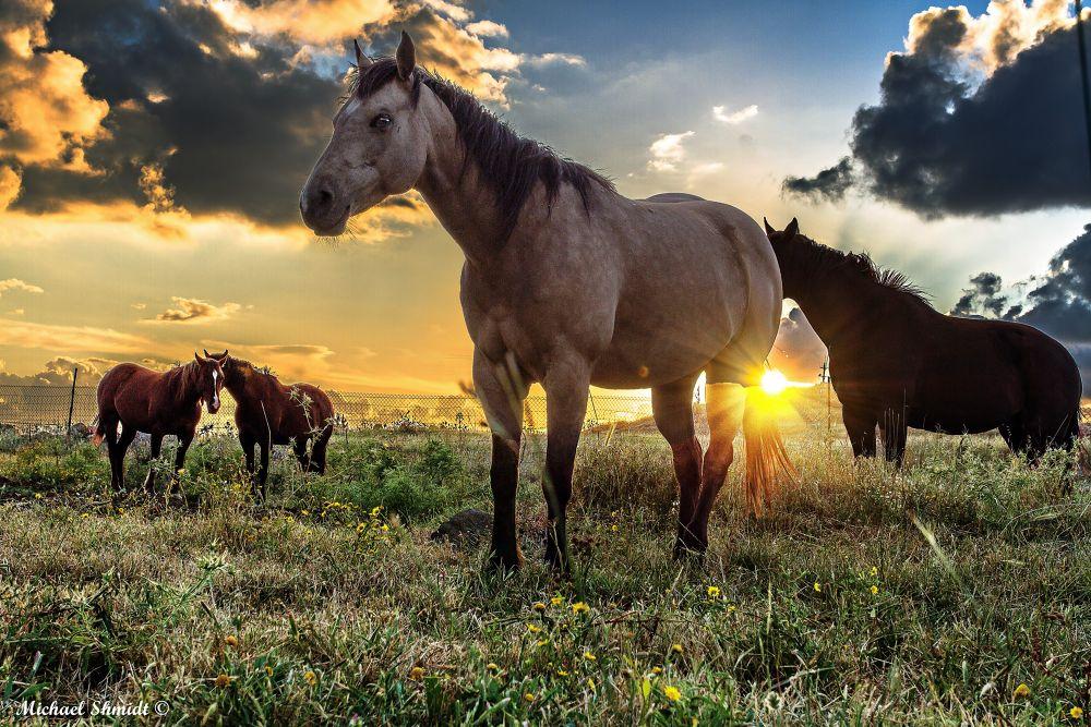 Horses legends .. by MichaelShmidtPhotographerArtist
