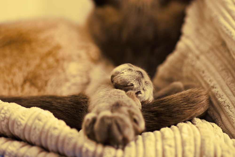 Paws by Alfie Shillingford