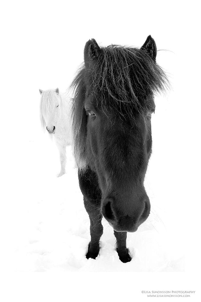 Black and white by donasimona