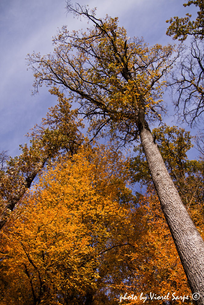 Autumn sky by viorelsarpe