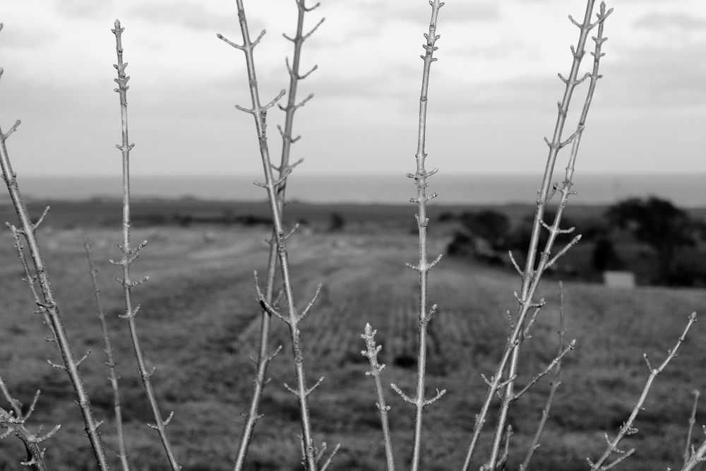 Twigs by Steve_Rees_Photography