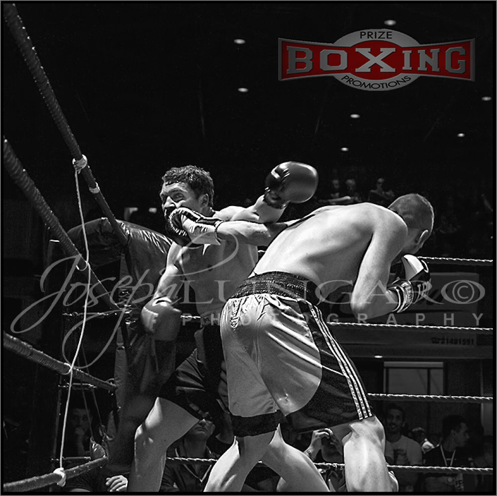 boxers 5 by lungaro1