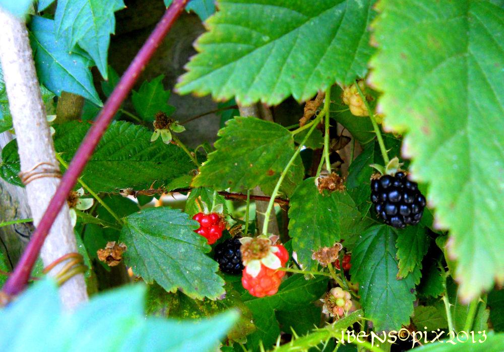 """""""Peekin' thru"""" - My garden. by Jaine"""