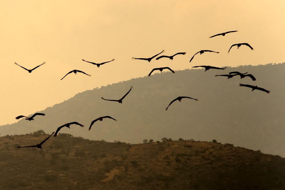 Freedom by eldadpaz