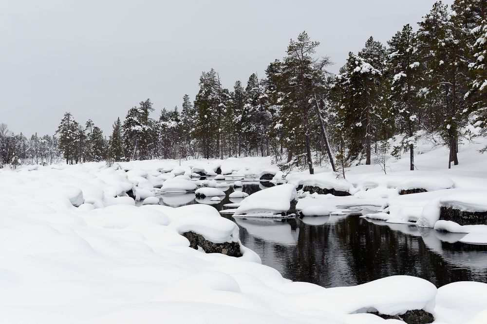 Winter by eldadpaz