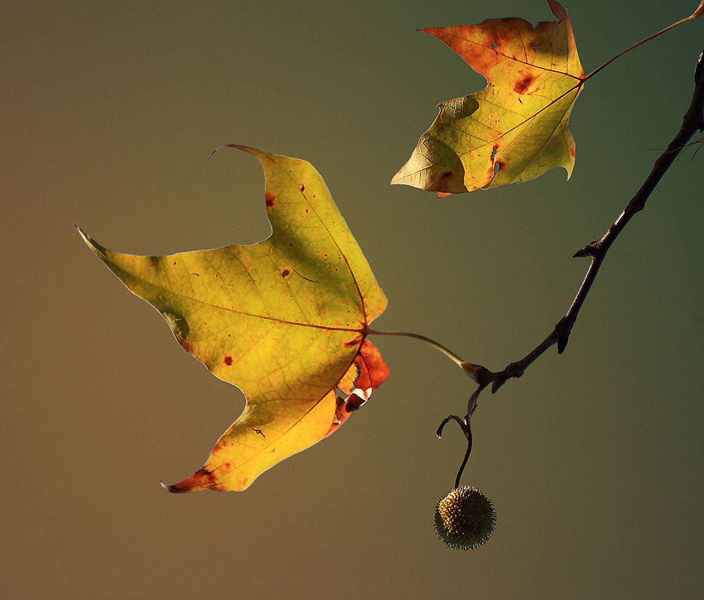 Photo in Nature #ypa2013 csendélet levél ősz