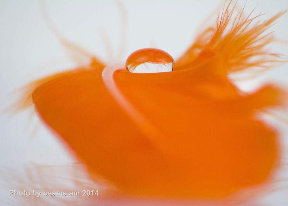 Orange by osamamohammed3304