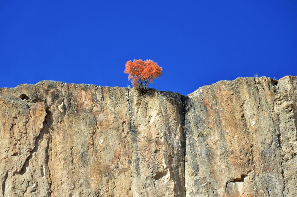 Lonely tree in Ihlara Valley, Turkey (www.adventurous-travels.com) by TomL