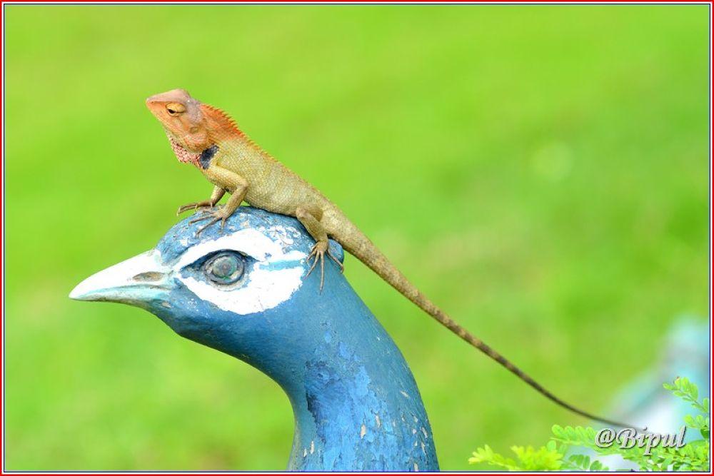 Wild Beauty by bipultkarmakar