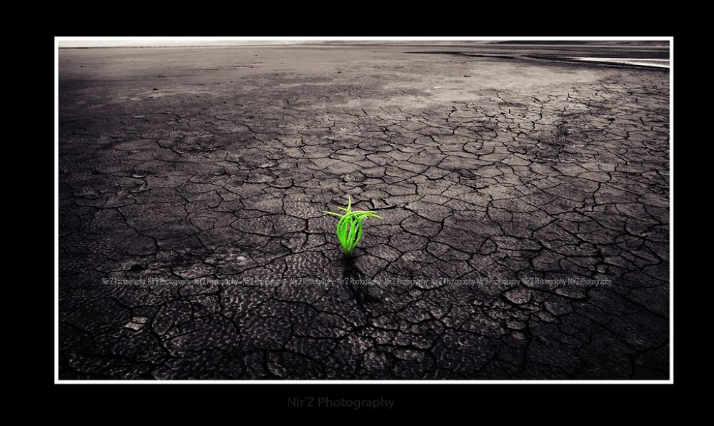 Life Goes on by NirZPhotography