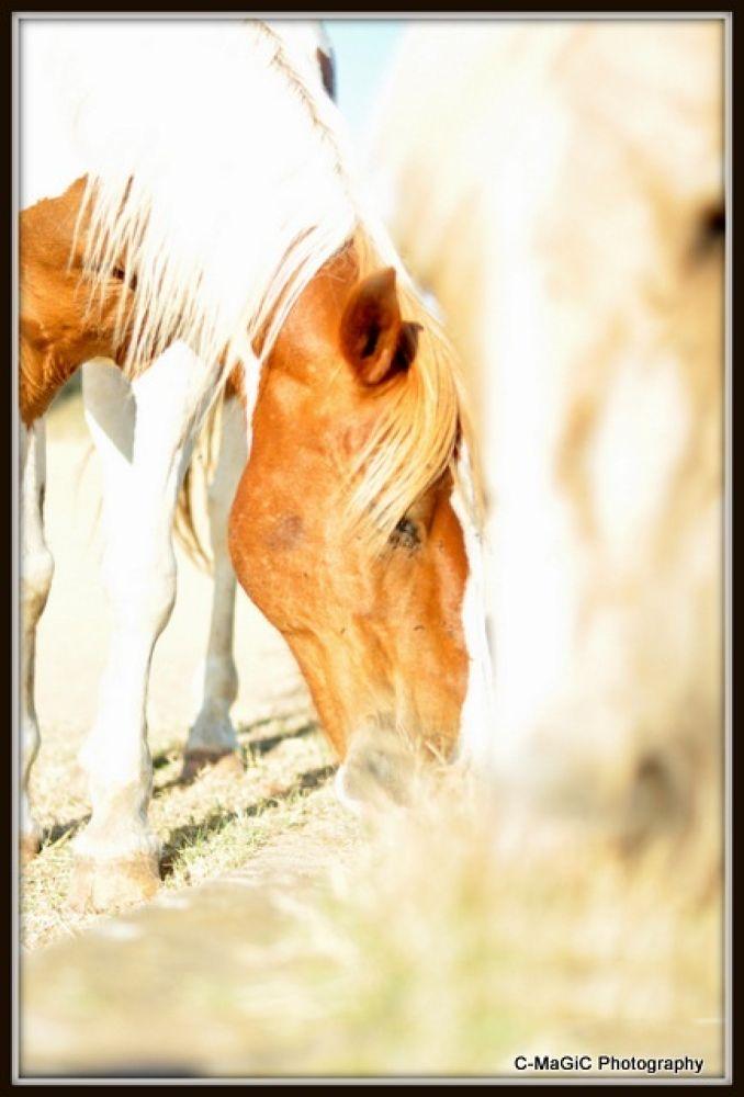 two horses by ClaraMaGiC