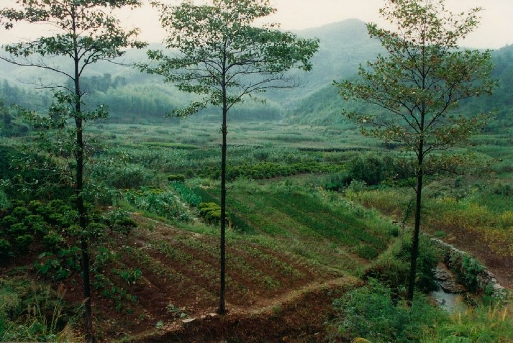 Zhejiang_Xikou_Mountain_Nurseries-105 by Arie Boevé