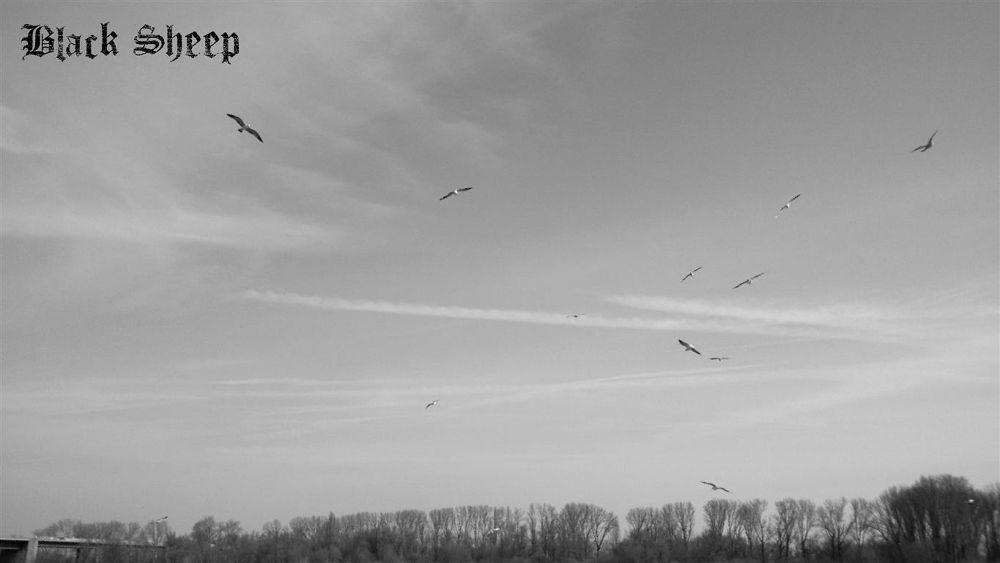 Am Rhein by Black Sheep Photography