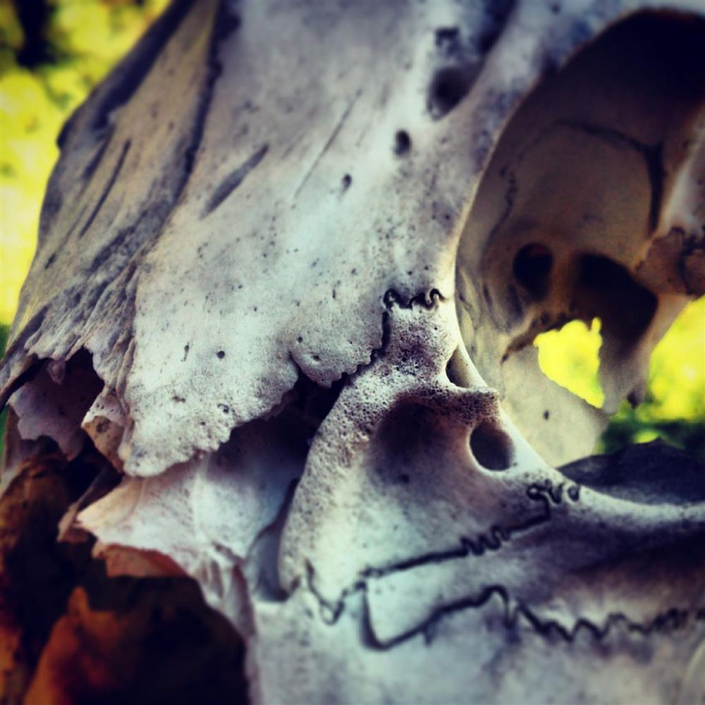 Skull by Black Sheep Photography