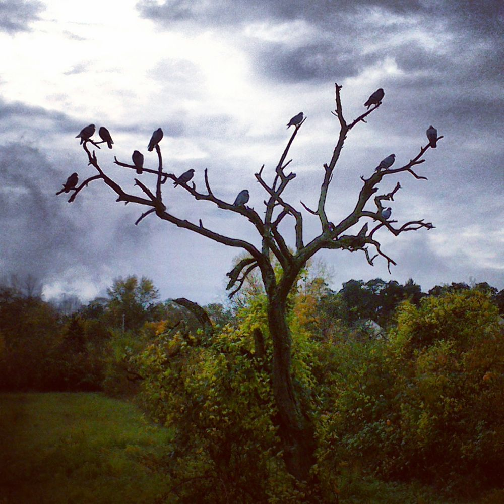 Tree of Birds by Black Sheep Photography