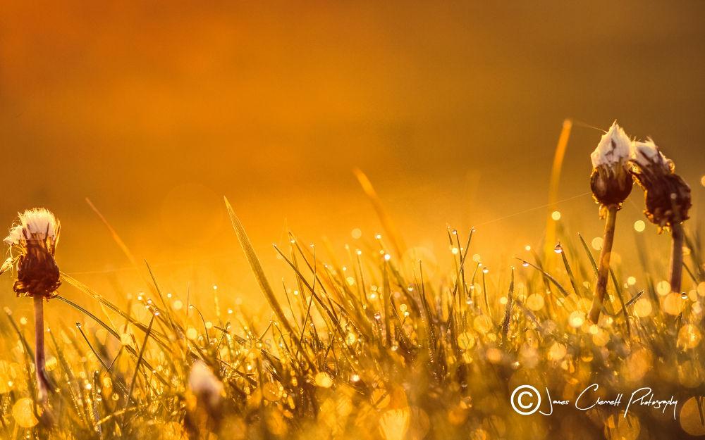 Morning Boken Dew by jamesclennett